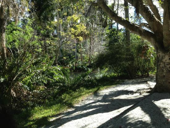 Palm Tree Covered Walkways Picture Of Sarasota Jungle Gardens Sarasota Tripadvisor