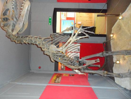 The Dinosaur Museum : Dinosaur