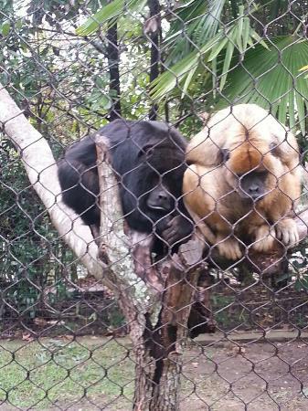 Hattiesburg Zoo : Cold monkeys!