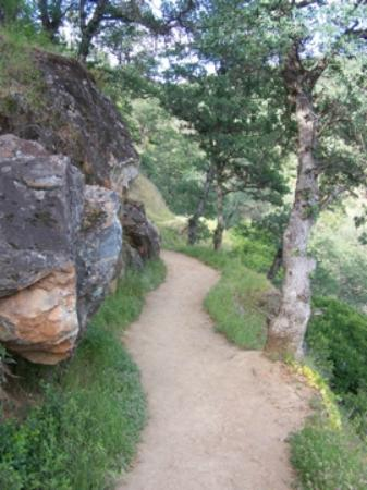 Penn Valley, CA: Beautiful Wild Flower trails to hike.