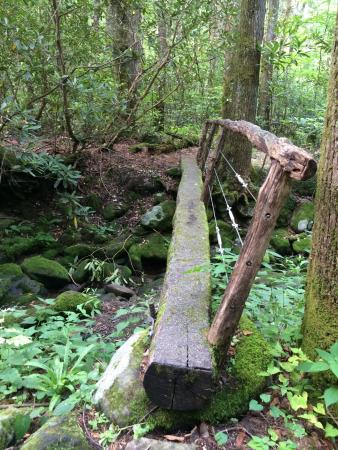Cosby Campground : Bridge on the nature trail in the campground
