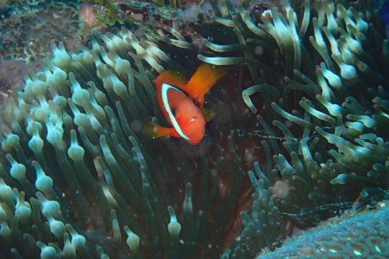 Blue Paradise Diving: 初カメラ
