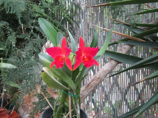 Picture of jardin de orquideas de sitio litre for Jardines de orquideas