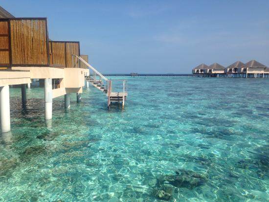 Coral reef steps from our room picture of adaaran prestige vadoo adaaran prestige vadoo coral reef steps from our room publicscrutiny Gallery