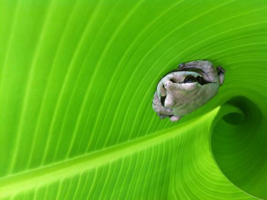 Cabinas el Peresozo: frog