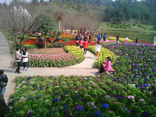 Xinjin County, Cina: Feb2015 Tulip Season