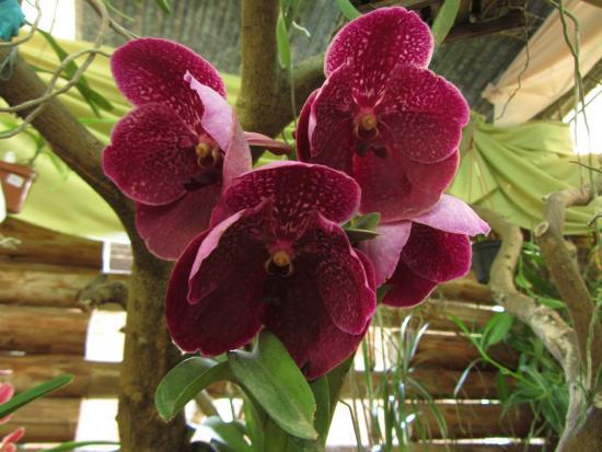Orquideario Catasetum: una sola increíble orquidea