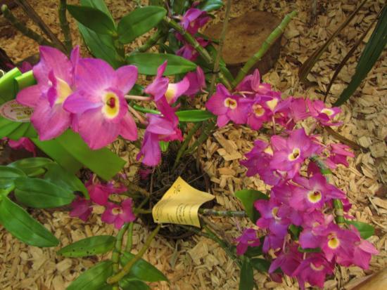 Orquideario Catasetum: increíbles Orquideas y más orquideas
