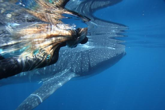 Charter 1 Whale Shark Swim & Snorkeling Tours - Day Tours