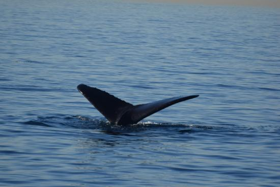 Dana Point, CA: Humpback off San Onofre...