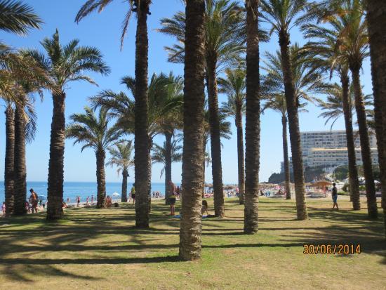 """Playa El Bajondillo: """"Пальмовый островок"""" на пляже."""