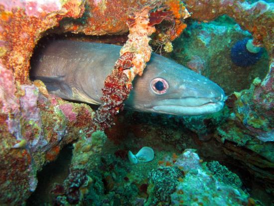 Indigo Divers – Albufeira Dive Centre