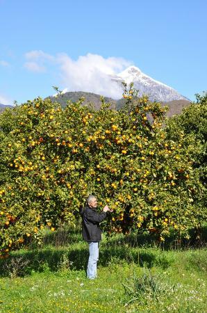 Akdeniz Bahcesi: Citrus trees in our garden