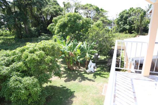 Tobago Lesville: garden