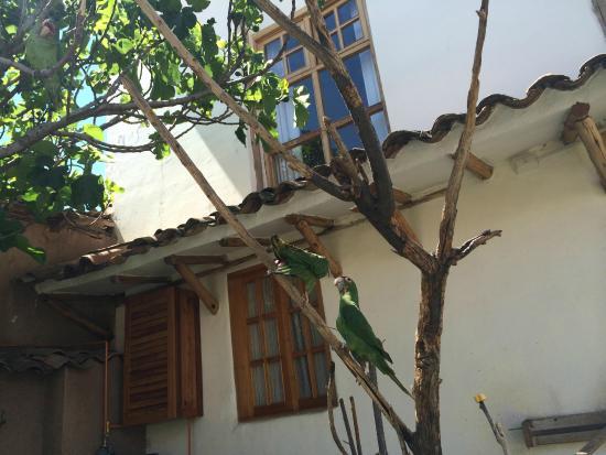 Casona La Recoleta: Resident Conures