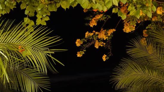 Hotel Luna Azul: Blick von Abendessen in die samtige tropische Nacht