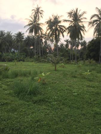 Palm Point Village: Рядом джунгли;)