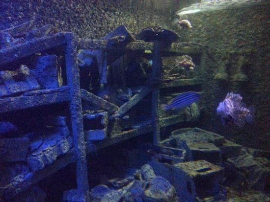 ... - Photo de National Museum of Marine Biology and Aquarium, Pingtung
