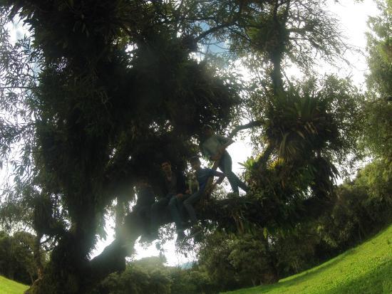 Umbria Hacienda Hotel Gourmet: Los niños jugando en un árbol