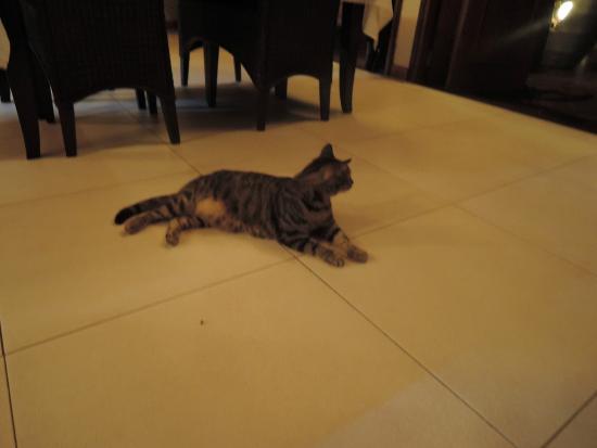 Mangoes Resort Restaurant & Bar : Spike the cat