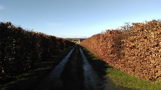 Lower Ballinderry, UK: path to the guesthouse