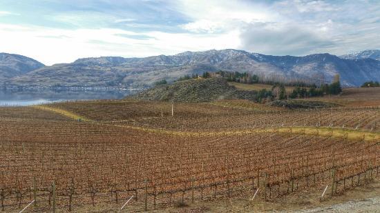 Benson Vineyards Estate Winery: The vineyards