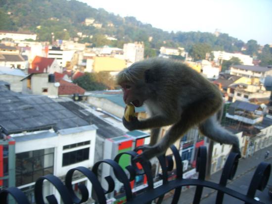 Hotel Casamara: утренние гости)