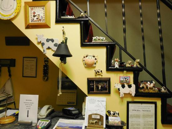 Buttermilk Lodge Guesthouse : decorazione a tema mucca
