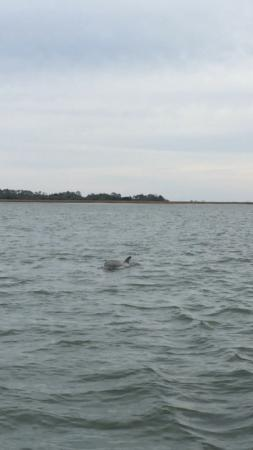 Compass Sailing, LLC: Dolphins everywhere!!