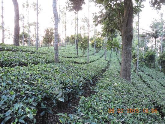 Landscape - Dream Catcher Plantation Resort: 4