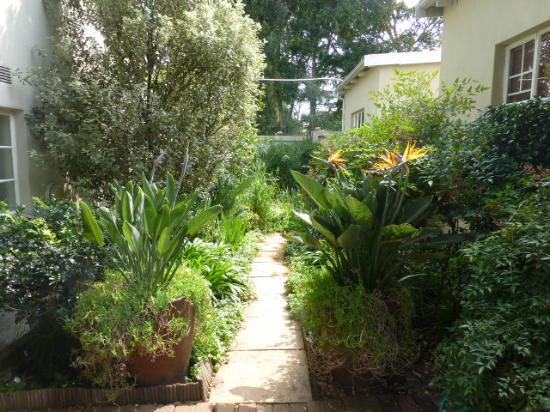 Liz at Lancaster Guesthouse: Plants inside the compound
