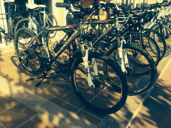 Ciclos Mora