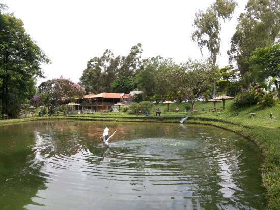 Cianorte: Lagoa de pesca