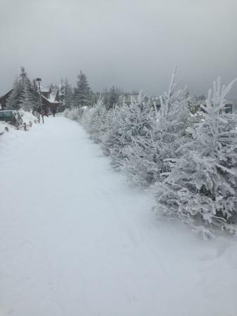 Allegheny Springs Condos at Snowshoe Mountain: The snow is so pretty!!
