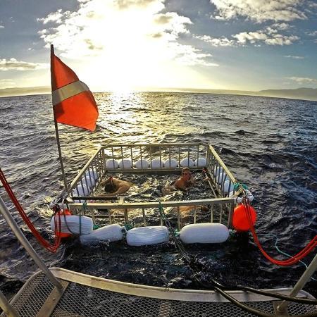 Hawaii Adventure Diving