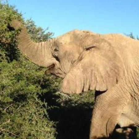 Such A Sweet Face Of This Female Elephant Picture Of Shamwari