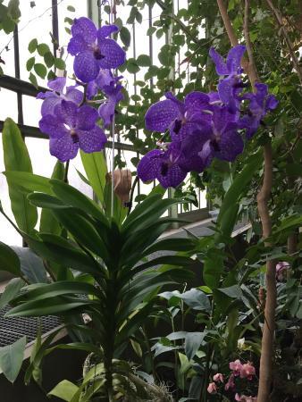 Galerie de Botanique Museum National d'Histoire Naturelle Jardin des Plantes