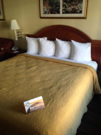 Quality Inn & Suites Biltmore East: King bed - Room 135