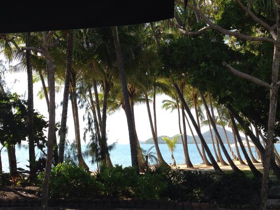 Palm Cove Holiday Park: Palm cove