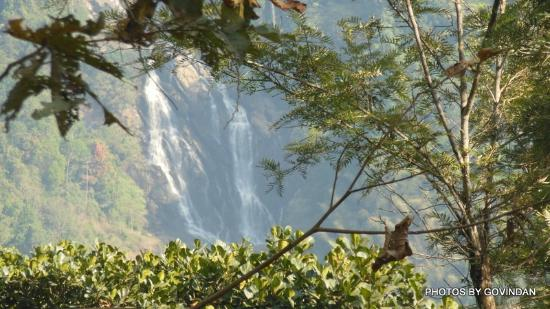 Vaduvanchal, Индия: Meenmutty falls from Neelimala view point