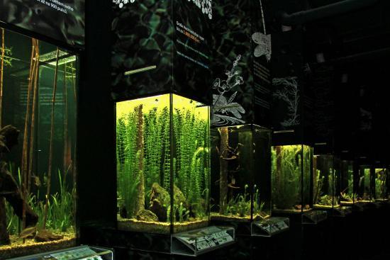 malvorlagen unterwasserwelt schrems - zeichnen und färben