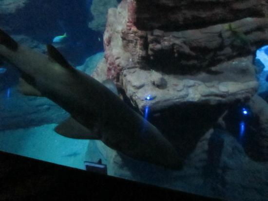 grand bassin picture of aquarium mare nostrum montpellier tripadvisor