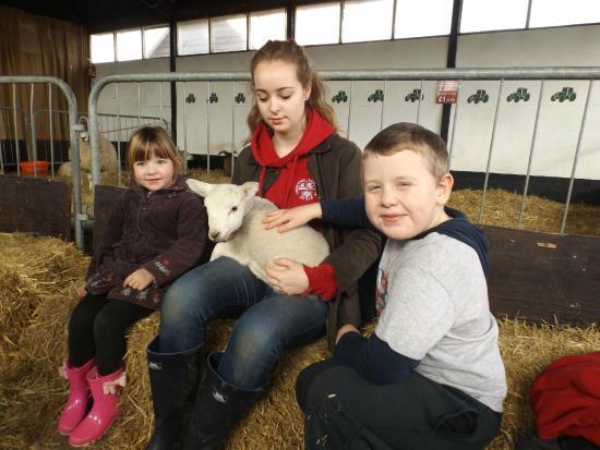 Easton Farm Park: hug a baby lamb