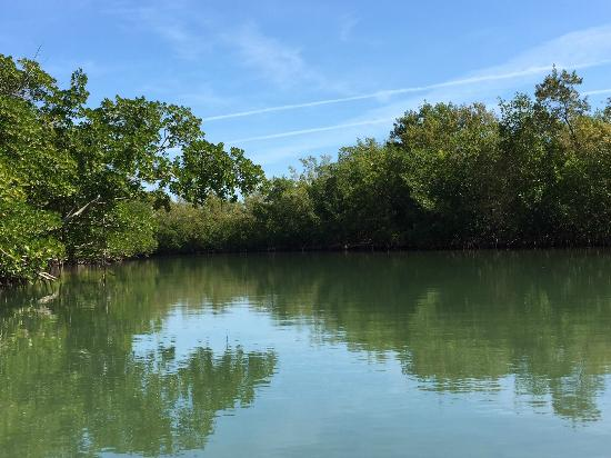 Blue Moon Outdoor Center: Mangroves line the banks of the park's canals.