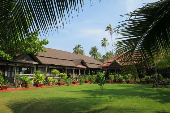Palm Tree Heritage: Heritage