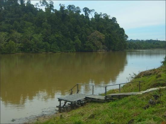 Sukau Evergreen Lodge : kinabatangan river
