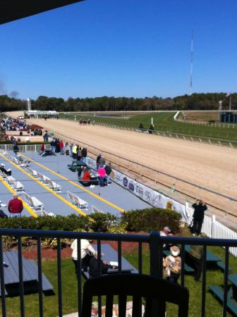 Tampa Bay Downs: Lower in picture, picnic tables for Garden Suite