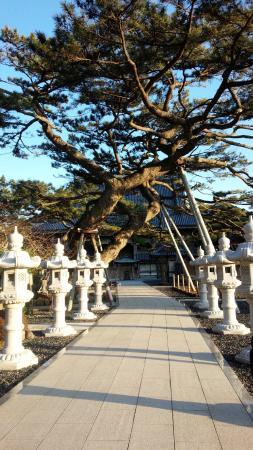 Tanjoji : お寺に続く道