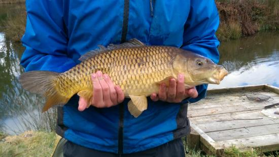 St. Tinney Farm Holidays : Catch of the Day