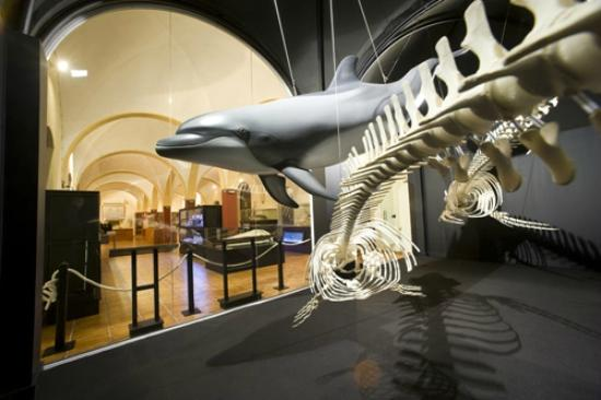 Torrevieja, Spain: MUSEO HISTORIA NATURAL